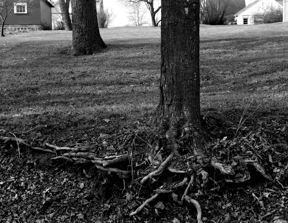 110-Tree-Roots-and-Yard