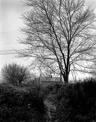 313_23-Tree-_-Path