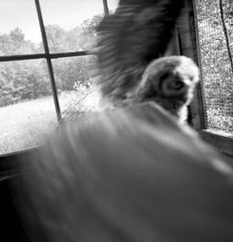 337_09_Owl