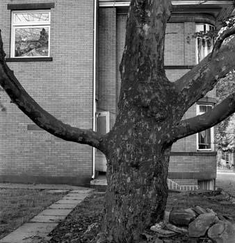 338_48_Backyard_Tree