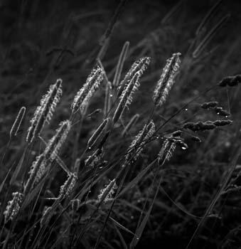 339_23-dew-on-the-grass