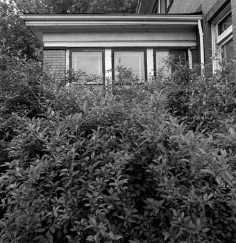 340_14_Front_Porch_Bushes