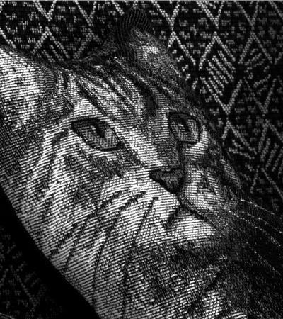 400_25_Cat_Pillow_iso_100_10x