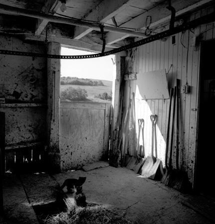 431_001a_Cowden_Barn_Cats_Near_Door