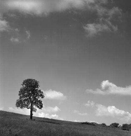 431_103_Cowden_Young_Tree_on_Hillside