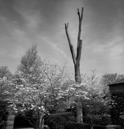 432_08_Commons_Dead_Tree_10x10
