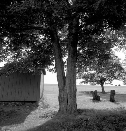 432_151_Split_Tree_Shed_and_Stumps_10x