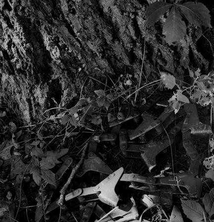 433_039_Cowden_Chain_Walnut_Tree