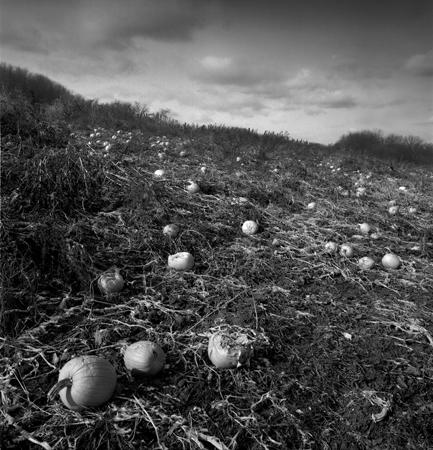 433_076_Cowden_Pumpkin_Field_10x