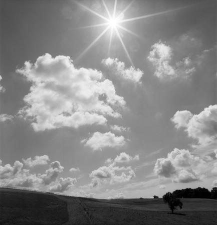 433_116_Dinsmore_Field_Tree_Sun_10x