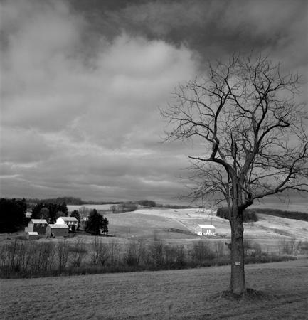 433_170_Cowden_Winter_Tree_Farm_10x