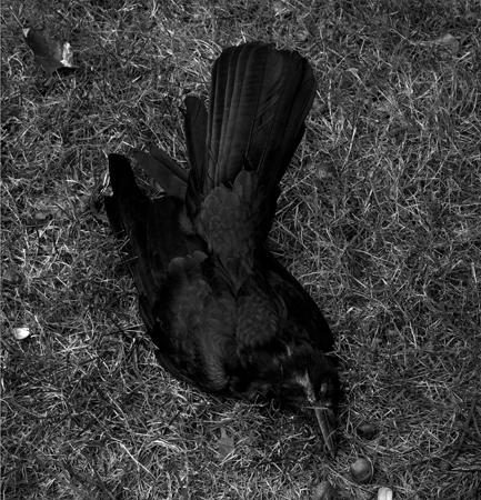 433_18_Death_of_the_Crow_10X