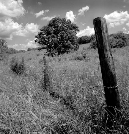 434_048_Cowden_Fence_Post_Tree