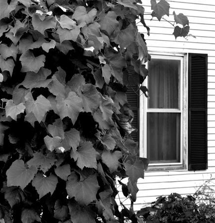 434_062_Cowden_Ivy_Window_10x