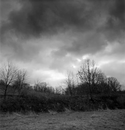 434_101_Cowden_Winter_Forest_10x