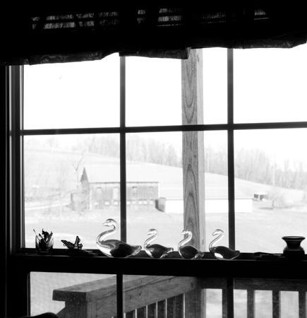 435_019_Chub_s_Ducks_in_Window_10x