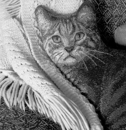 435_06_Cat_Pillow_Shawl_10x
