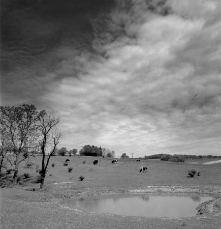 435_073_Cowden_Pond_Cows_Sky_10x
