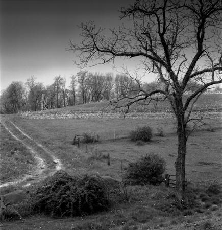 435_093_Cowden_Tree_bush_road_10x