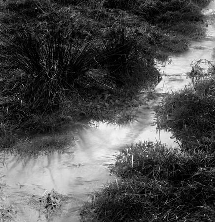 437_086_Cowden_Stream_In_Field_10x