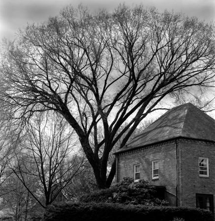 437_10_Corner_House-Tree_with_Sun_10x10_final
