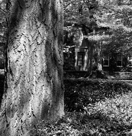 437_32_Gingo_Tree_Shadows_10x10_Final