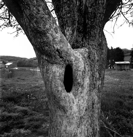438_057_Cowden_hole_in_Tree_10x_v3