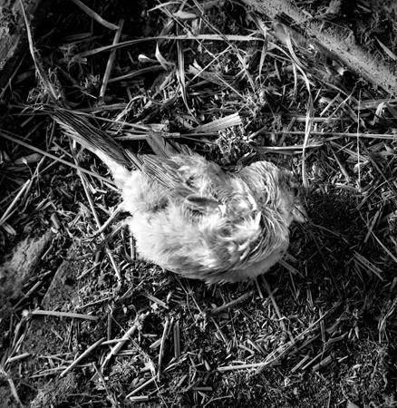 438_115_Dinsmore_Dead_Blue_Bird_10x_v2