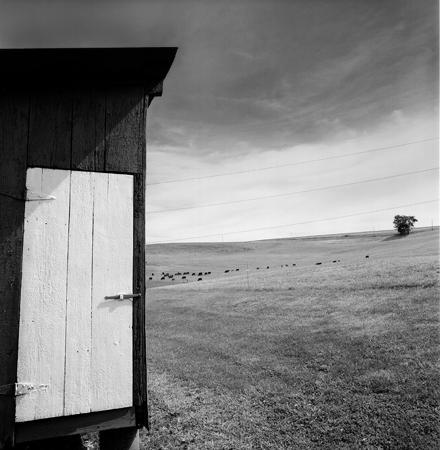 440_123_Door_and_Cattle_in_Field_10x