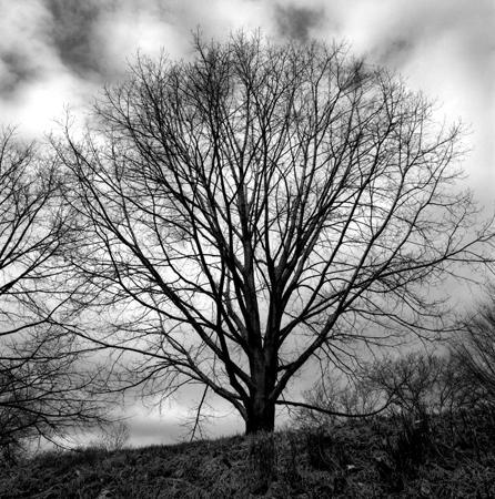 446_02_April_Tree_10x10_Final
