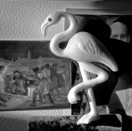 450_23_Flamingo_Shadow_Manet_10x